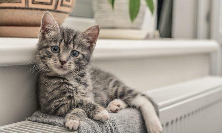 La tua casa a misura di gatto