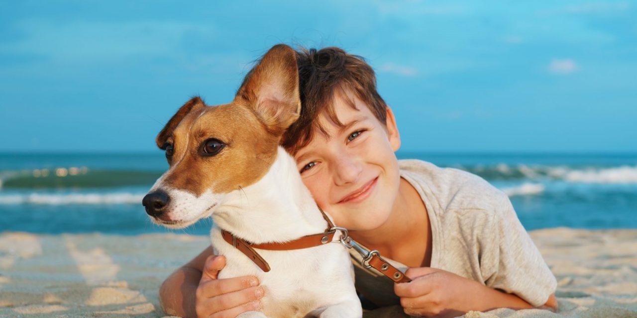 Cani in spiaggia: proteggili dai colpi di calore