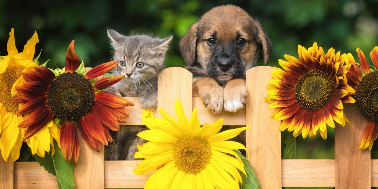 Rimedi naturali e omeopatia in veterinaria