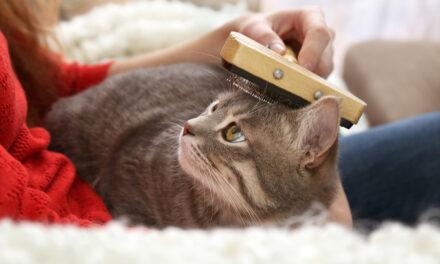 La toelettatura del pelo del gatto