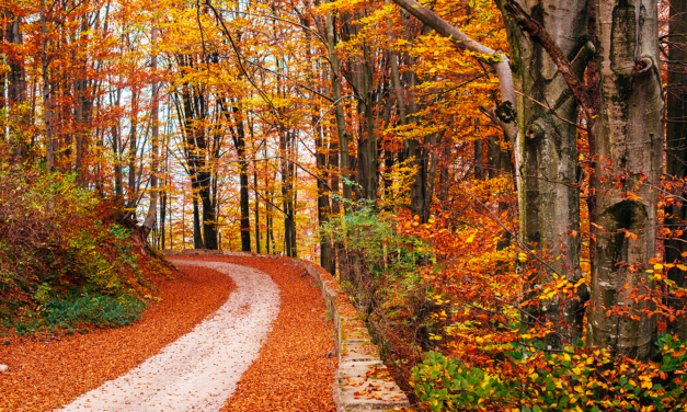 Foliage in Italia: i percorsi più suggestivi