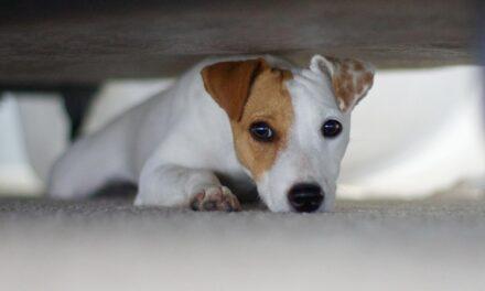Animali e botti di capodanno: che paura! Come proteggerli?