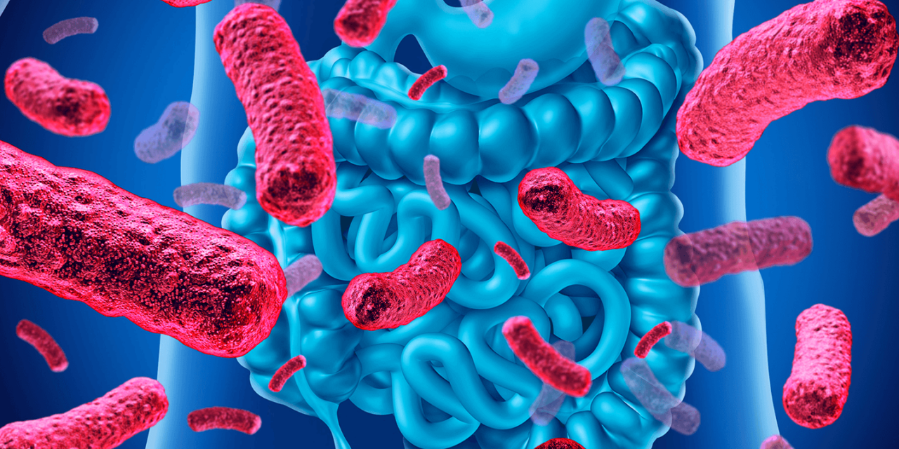 Microbiota intestinale: cos'è e perché è importante?