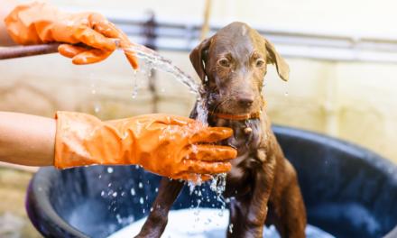 Come prendersi cura del cane in estate